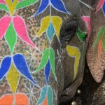 Why We Didn't Enjoy the Jaipur Elephant Festival