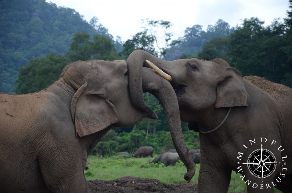 Elephants playing around