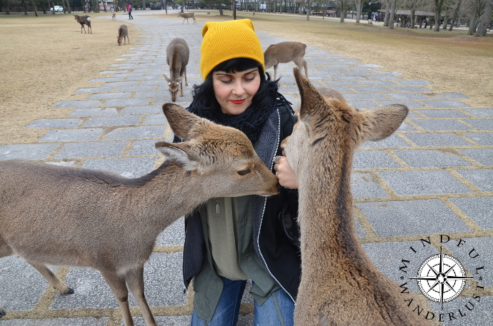Giselle giving some love to the deer of Nara