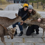 Spending the Day in Nara With the Sika Deer