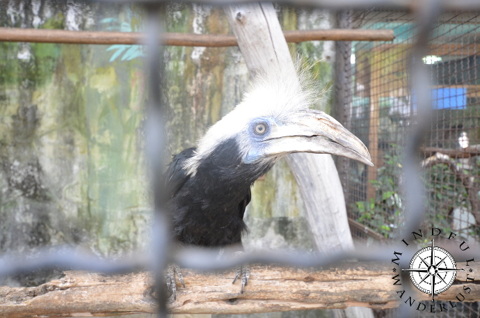 One of the many birds at Pata Zoo