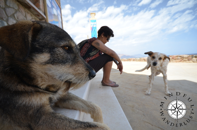 The Beautiful Dogs Of Dahab
