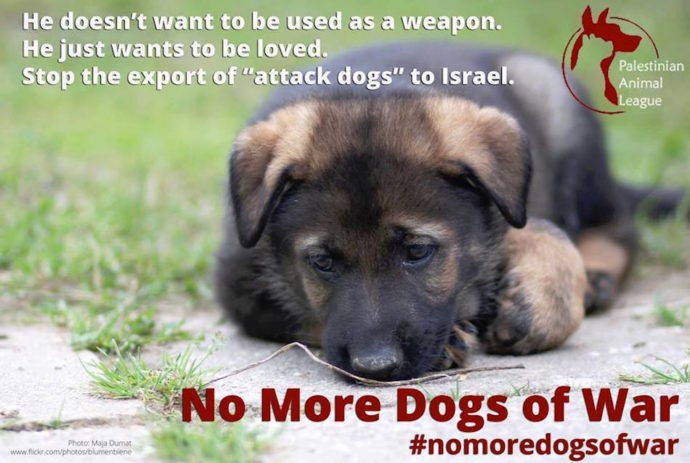 nomorewardogs